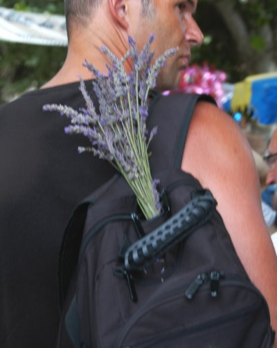 lavender-15.JPG
