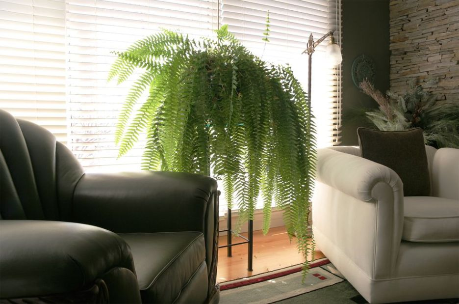 home-trens-fern Elle Decor Outdated Trend