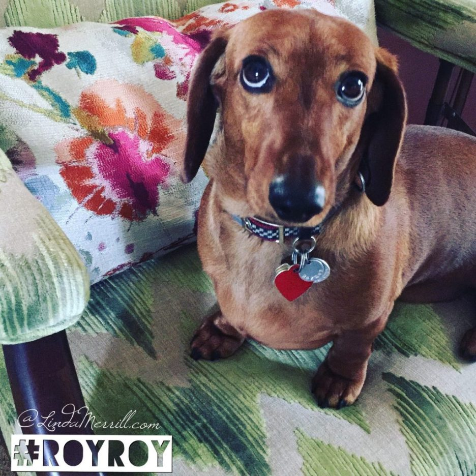 Accent-chairs-Linda-merrill-Lee-Jofa-watersedge-green-with-colorful-pillow-and-RoyRoy-dachshund