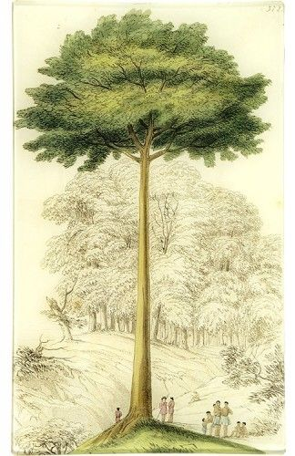 John Derian decoupage Tree Plate