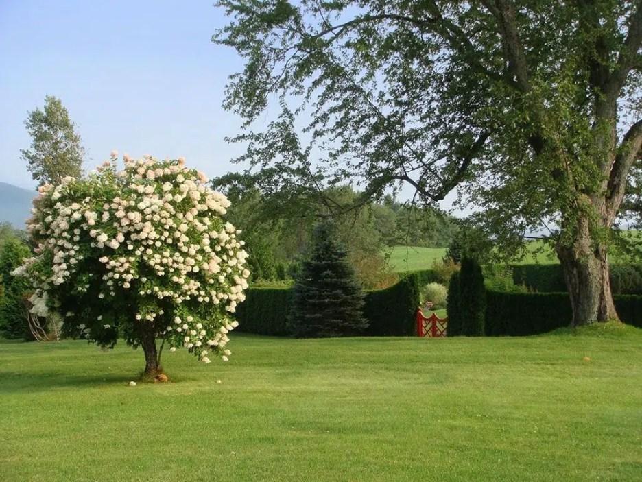 Burklyn Hall grounds 1