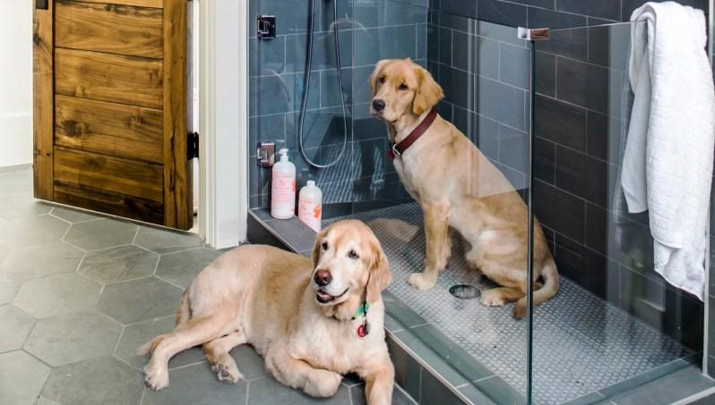 Harrison Design harrisondesign Photo Jeff Herr dog washing show