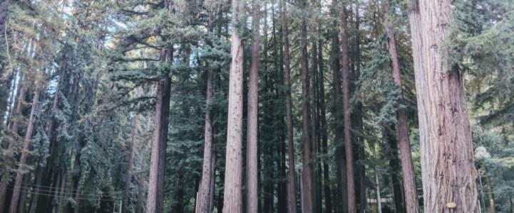 露營車-VanLife週記6: 北加州美麗的森林與海灘 Santa Cruz