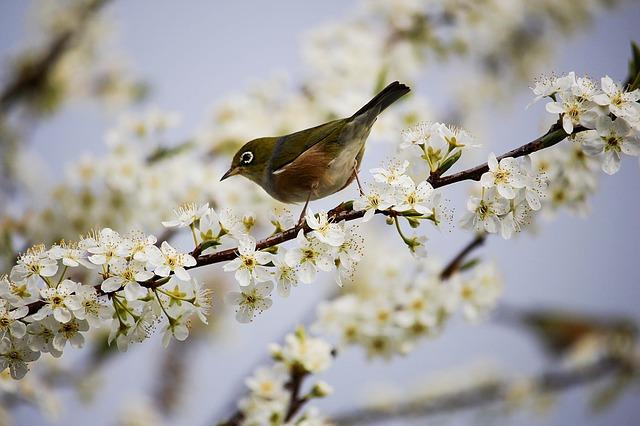 Vogel op een tak met bloesems