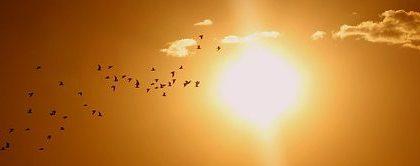 Afbeelding van vogelt in de lucht