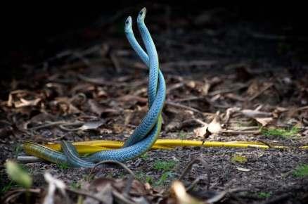 Foto: Foto van parende slangen van Trevor Cole, unsplashfoto's