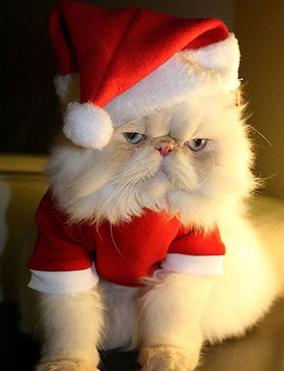 pus med julenissedrakt