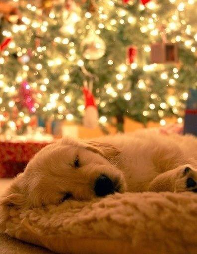 hund foran juletre