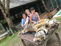 These 2 young tigers were playing on the table but we managed to still give some belly rubs