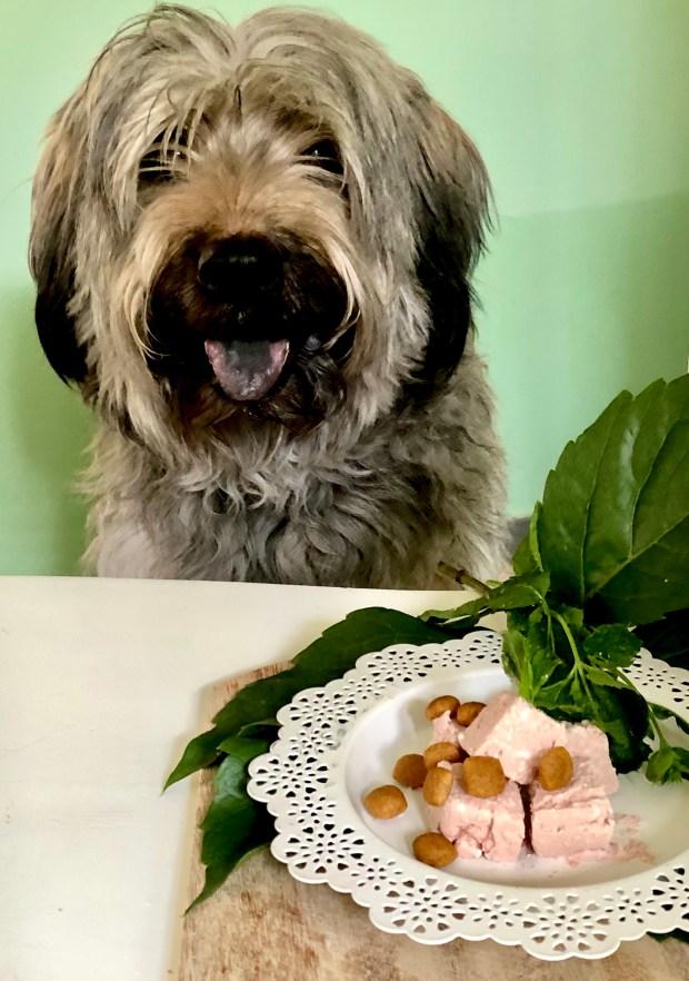 Henry der Gos d'Atura sitzt vor dem Teller mit dem Leberwurst-Eis