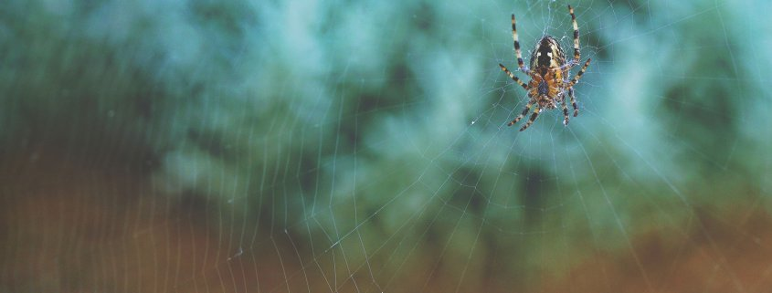 Spider on web, Beware of fly-by-nighter companies