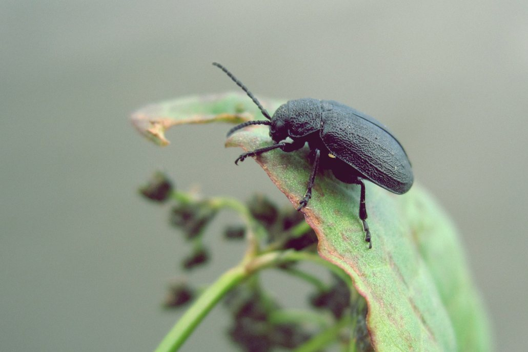 Beetle on leaf, Tacoma-based and family-owned pest control and inspection company
