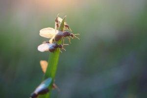 Moisture ants on leaf