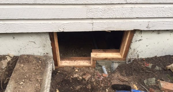 Home repairs: Lind Pest Control (Gig Harbor)