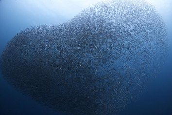 sardines-8
