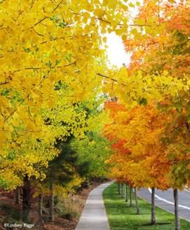 img_0886_fall-leaves