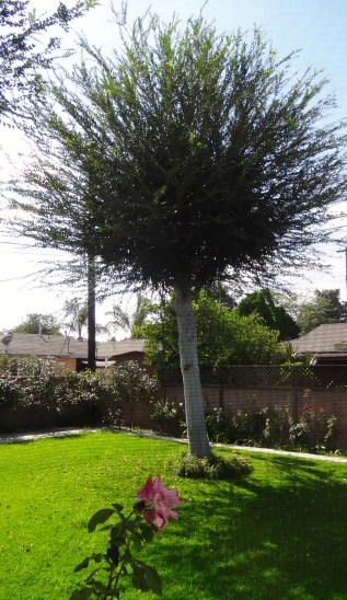 Grandma's Tree