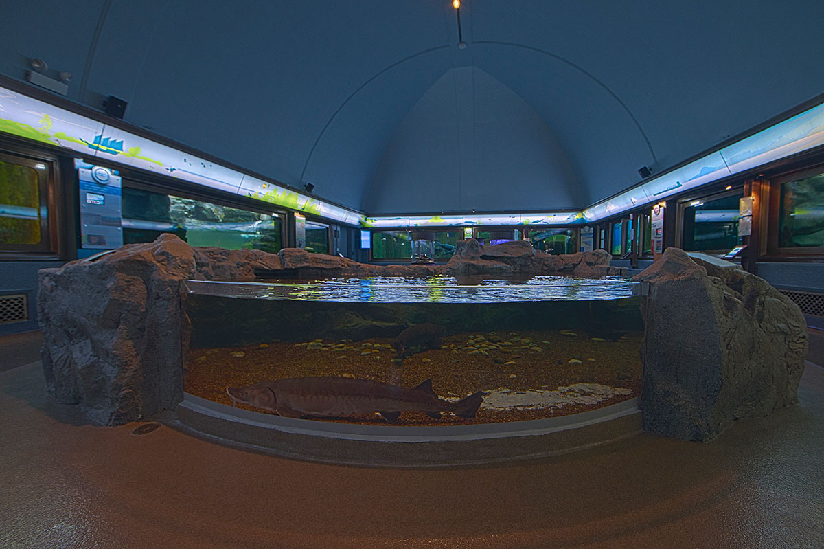 A photo of the At Home in the Great Lakes gallery at the Shedd Aquarium, with the lit header illustration clearly visible lining the area above the animal habitats.