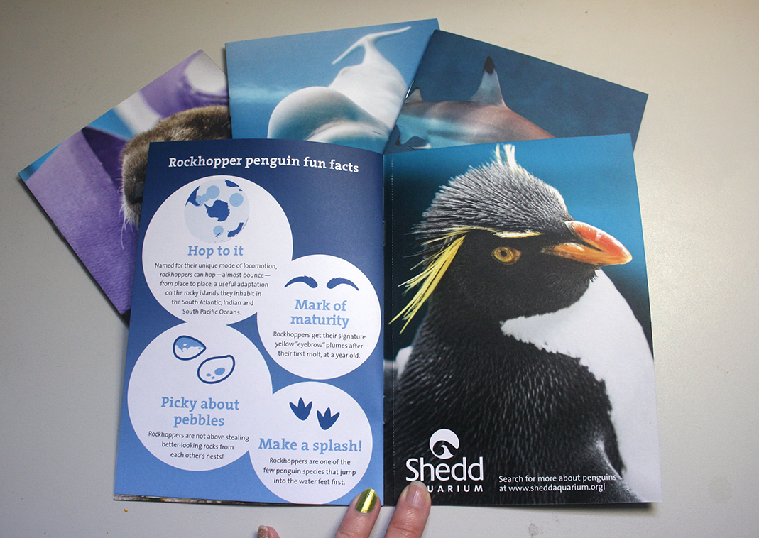 A booklet is shown opened to an informational spread about rockhopper penguins. The left page, titled 'Rockhopper penguin fun facts', features four white circles over a blue gradient. In each circle is a fun fact and a corresponding icon. On the right page is a picture of a mature rockhopper penguin from the wings up.