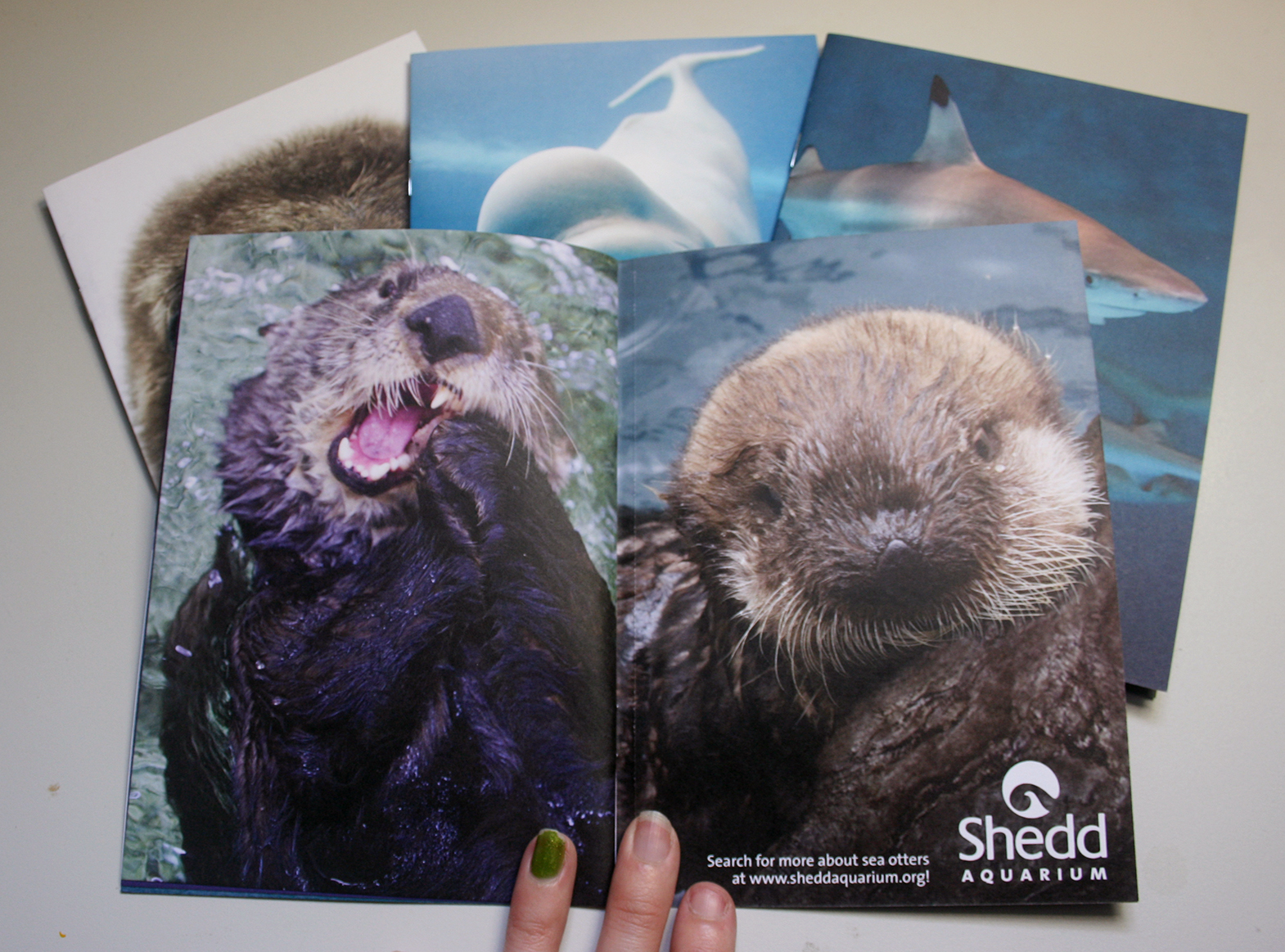 A booklet is shown opened to two photos of sea otters. The sea otter on the left is contorting its mouth to crack open a clam shell, and the otter on the right, a pup, is fluffy and looking up at the camera from the water.
