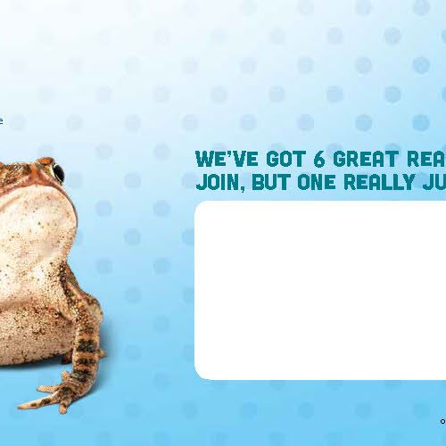 The back spread of a self-mailer consisting of three panels. The leftmost panel features a photo of the bottom half of a green tree frog hanging off of a bamboo stick next to the headline, 2. Exclusive updates and features. The middle panel shows a toad on a bright blue background next to a white address box, and the rightmost panel has a bright orange background and a photo of an Amazon milk frog and the headline, '6 ribbiting reasons to become a shedd member'.