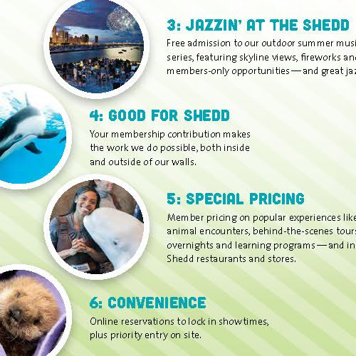 The inside spread of a self-mailer, featuring three panels. The leftmost panel has a photo of a green tree frog leaning off of a bamboo stick, with the title '1. Amphibians' followed by information about the Amphibbians special exhibit at Shedd Aquarium. Cascading photo circles in the middle panel detail reasons 3–6: '3. Jazzin' at the Shedd', '4. Good for Shedd', '5. Special Pricing', and '6. Convenience'. The rightmost panel is dominated by a photo of a wet-looking spotted salamander and the title, 'Becoming a member is as easy as a hop, a skip, and a jump!' and information about becoming a Shedd member.