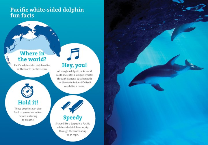 MKT1721_Adopt_Kit_booklet_Dolphin_Final__Page_5_RGB
