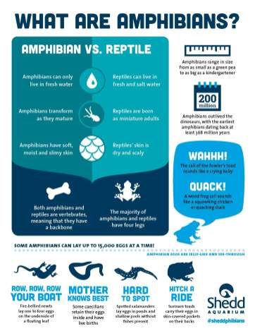 PR1501_Amphibians_Print_Infographic_P1_FINAL