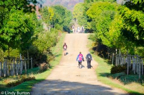 Camino path