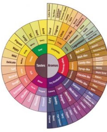 The official Coffee flavor tasting wheel