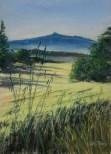 Tuscan wheatfields