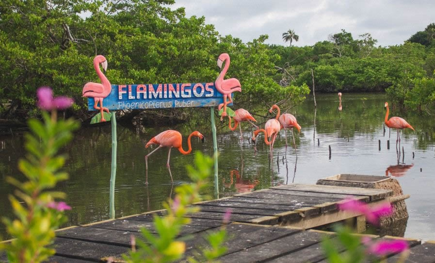 isla flamingos viajes linearcol tour colombia isla palma