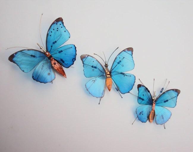 entomo11