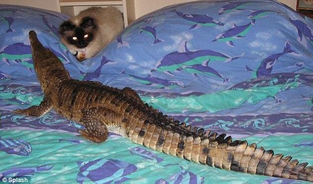 krokodeilaki2