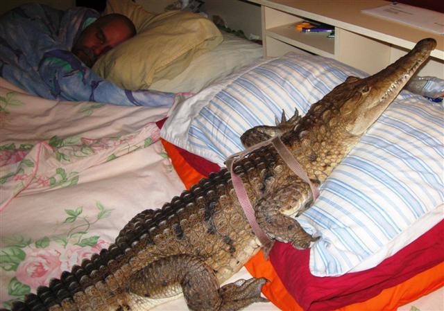 krokodeilaki4