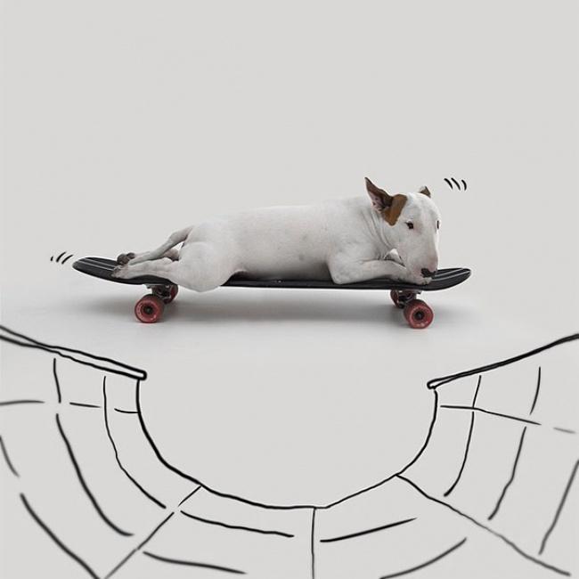 Bull-Terrier18