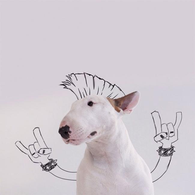 Bull-Terrier2