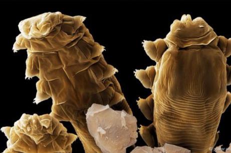 Μικροσκοπικά Έντομα2