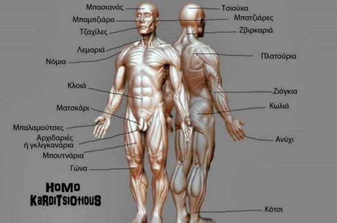 karditsiotiki-anatomia