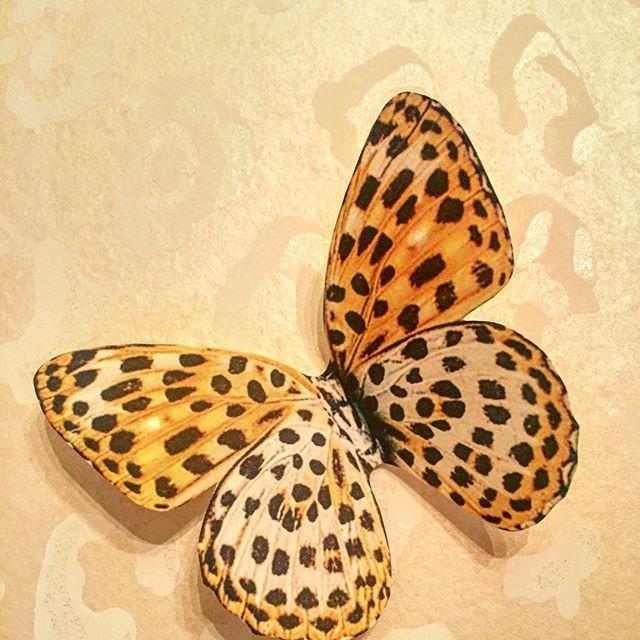 petaloudafida