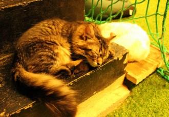 London Cat Village: A feline oasis in the city
