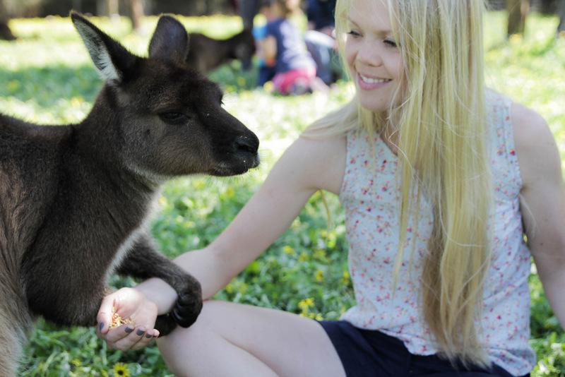 Kangaroos at KI Wildlife Park