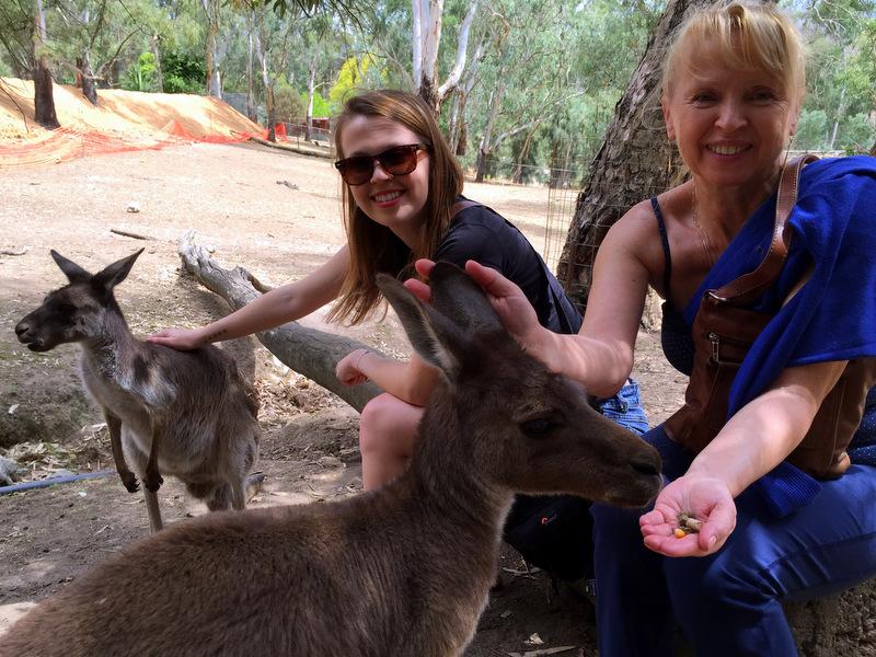 Feeding kangaroos at Gorge Wildlife Park