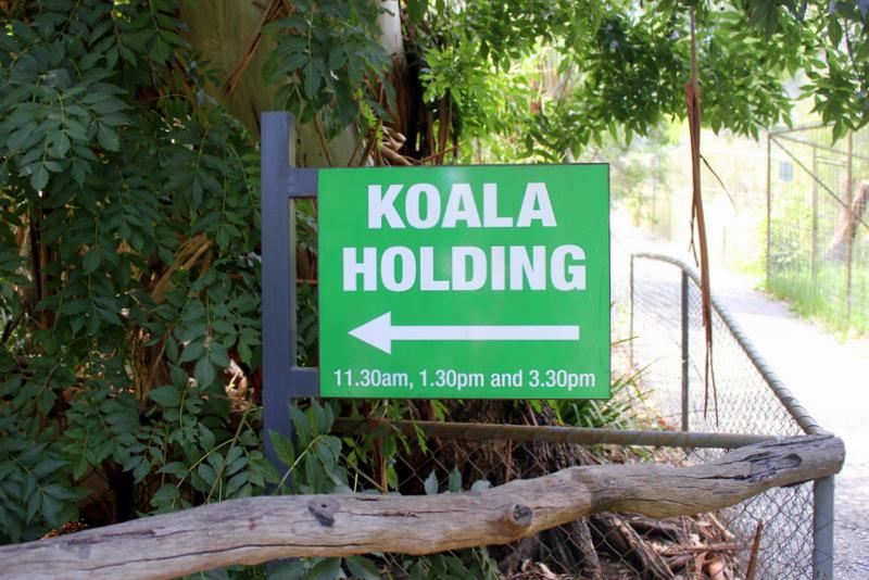 Koala holding at Gorge Wildlife Park