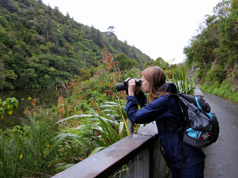 Birdwatching at Zealandia, Wellington