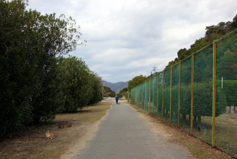 Walking on Okunoshima
