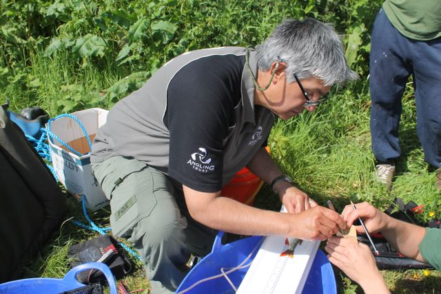 6.Dilip Sarkar tries his hand at removing a scale during the Severn Basin Predator Study training day hosted by Brecht Morris of the EA at a Kinver Freeliners' Angling Club venue near Bridgnorth.