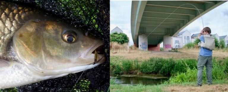 Urban chub fishing