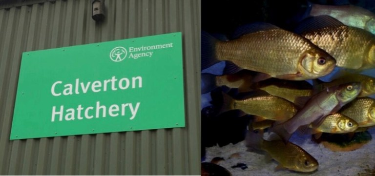 Calverton Environment Agency fish farm