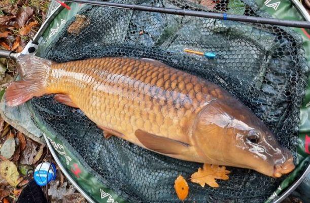 how long do carp live fish lifespan
